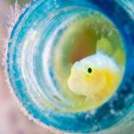 横浜のユニークな水族館